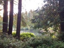 Le jour de lac Photo libre de droits