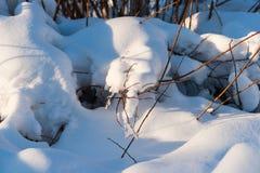 Le jour ensoleillé dans une neige de forêt d'hiver a couvert des arbres image stock