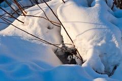 Le jour ensoleillé dans une neige de forêt d'hiver a couvert des arbres photo libre de droits