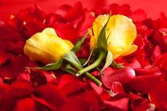 Le jour rouge de Valentine de pétales de roses Images libres de droits
