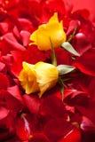 Le jour rouge de Valentine de pétales de roses Photographie stock
