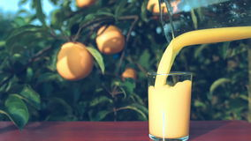 Le jus d'orange est versé d'une cruche dans un verre sur un fond des oranges mûres sur l'arbre banque de vidéos
