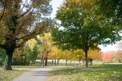 Le juste de promenade dans le bois, par l'herbe verte, des couleurs rayonnantes oranges d'automne s'est trouvé sur l'herbe Photo stock