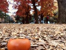 Le kaki orange mûr sur la terre qui est pleine du ginkgo part Photo stock