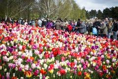 Le Keukenhof, le jardin d'agrément aux Pays-Bas photos stock