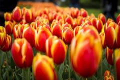 Le Keukenhof, le jardin d'agrément aux Pays-Bas photo stock
