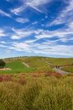 Le Kochia met en place avec le beau ciel dans Ibaraki, Japon Images libres de droits