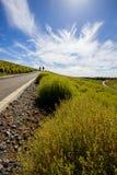 Le Kochia met en place avec le beau ciel dans Ibaraki, Japon Photographie stock