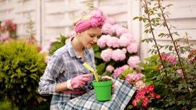 Le kvinnan som gr?ver och bevattnar blommor i hennes g?rd En h?rlig kvinna att bry sig f?r rosa vanlig hortensia Begreppet av stock video