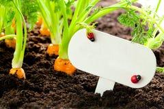 Le légume de carotte se développe dans le jardin avec le panneau des textes à B allemand image libre de droits