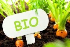 Le légume de carotte se développe dans le jardin avec le panneau des textes à B allemand image stock