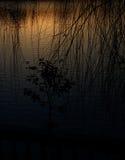 Le lac de coucher de soleil a placé outre du mystère de l'ombre de l'arbre Photos stock