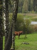 Le lac de forêt photos libres de droits