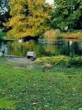 Le Lac Des cygnes zdjęcia stock