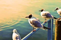 Le Lac Léman, paysage et oiseaux en Suisse, l'Europe Image stock