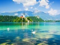 Le lac a saigné avec le cygne, Slovénie, l'Europe Photos stock