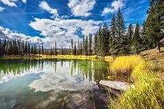 Le lac superficiel est entouré avec la forêt conifére Photos stock