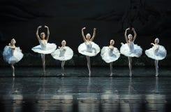 Le lac swan de fille-ballet de cygne Images stock