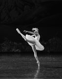 Le lac swan de mouche-ballet de cygne Images libres de droits