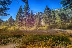 Le lac Tahoe Forrest images libres de droits