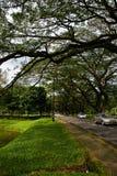 Le lac Taiping fait du jardinage stationnement vert Image stock