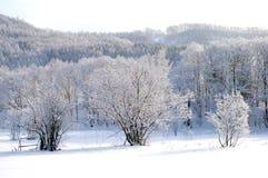 Le lacet de l'hiver. Photographie stock libre de droits