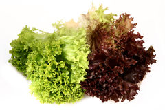 Le Lactuca sativa lettuce_green le rouge Photos stock