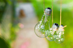 Le lampadine nel giardino appendono sull'albero Fotografia Stock Libera da Diritti