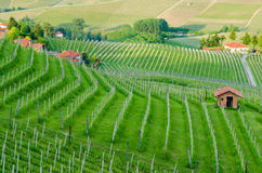 Le Langhe, Piedmont Stock Photography