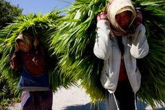 Le Laotien Photos libres de droits