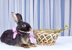 Le lapin avec un arc au cou est près des paniers de Pâques Photographie stock
