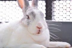 Le lapin dort Photo stock