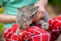 Le lapin est bel animal de nature Photos stock