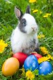 Le lapin et les oeufs de pâques Photographie stock libre de droits