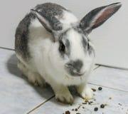 Le lapin mignon image stock