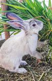 Le lapin mignon Photographie stock