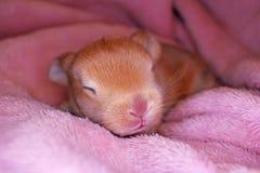 Le lapin mignon de bébé de lapin taillent le kit Lapins nouveau-nés image stock