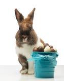 Le lapin mignon est les oeufs de chocolat proches Photographie stock