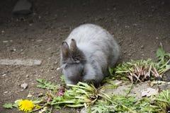 Le lapin mignon mange dans le zoo Photographie stock libre de droits