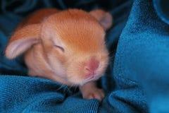 Le lapin mignon taillent le kit de bébé de lapin sur le fond coloré de studio Lapins animaux d'animal familier de bébé nouveau-né images stock