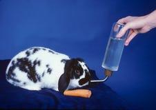 Le lapin obtient la nourriture et la boisson Photographie stock libre de droits