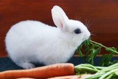Le lapin pelucheux blanc mange le feuillage vert luxuriant des carottes Images stock