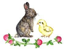Le lapin pelucheux gris de lièvres et le petit poussin jaune avec le trèfle fleurit la décoration Image stock