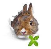 Le lapin regarde par un trou dans un papier photographie stock