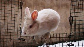 Le lapin saute par-dessus la barrière images libres de droits