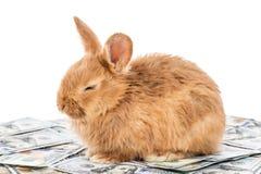 Le lapin se trouve sur l'argent photographie stock libre de droits