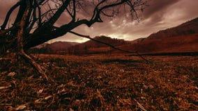 Le laps de temps de l'arbre de la mort et s?chent l'herbe jaune au paysage mountian avec des nuages et des rayons du soleil Mouve banque de vidéos