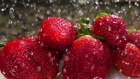 Le lavage des fraises, l'eau laisse tomber le mouvement lent banque de vidéos