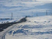 Le lepri polari attraversano la strada Fotografie Stock Libere da Diritti