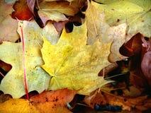 Le lettere a partire dall'autunno Fotografia Stock